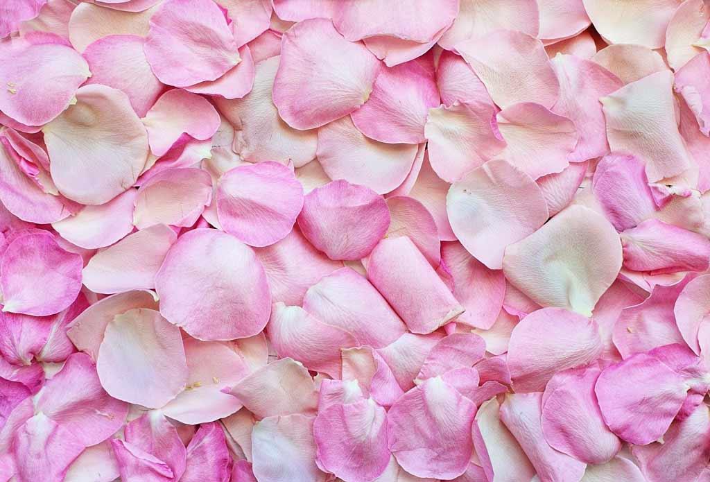 rose petals 3194062 1024